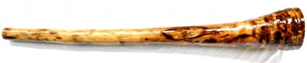 didge-41b