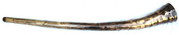 didge43b